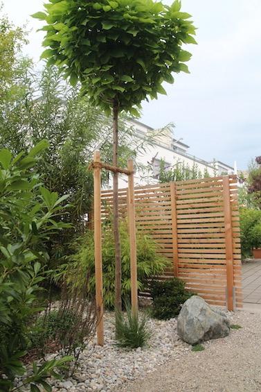 Sichtschutzelement aus Holz mit Trompetenbaum in Kugelform. (Freising)